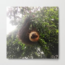 A wet sloth Metal Print