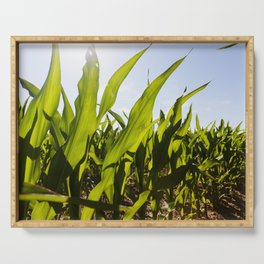 green leaves of corn Serving Tray