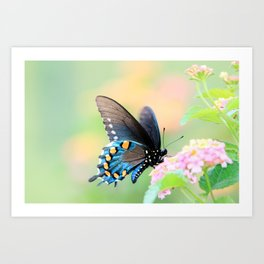 Spicebush Swallowtail Butterfly on Lantana Art Print