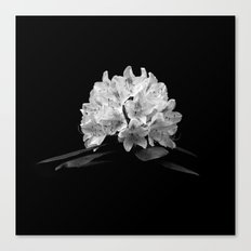 Rhododendron In Black And White Canvas Print