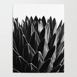 Agave Chic #7 #succulent #decor #art #society6 Poster