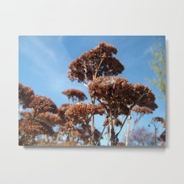 Autumn Death and Blue Sky Metal Print