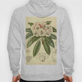 Rhododendron monosematum 1916 Hoody