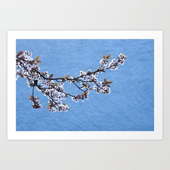 Blossom on Blue Art Print