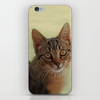 kitten iPhone & iPod Skins featuring kitten by lucyliu