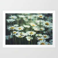 daisies Art Prints featuring daisies by Bonnie Jakobsen-Martin
