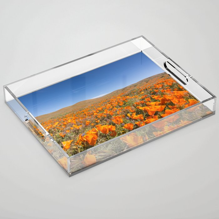 Blooming poppies in Antelope Valley Poppy Reserve Acrylic Tray