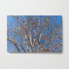 Trees 4 Dayz Metal Print