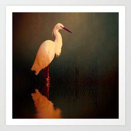 Midnight Egret Art Print