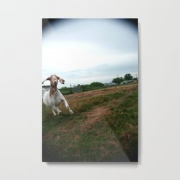 Chased by a Crazy Goat Metal Print