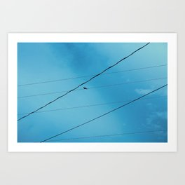 Bird on Wire Art Print