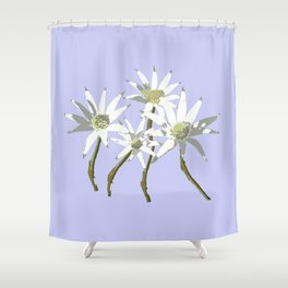 Flannel Flowers Actinotus helianthi Shower Curtain