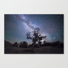 Astronomer's Tree Canvas Print