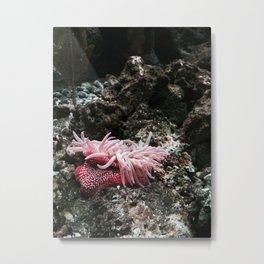 The Life Aquatic (5) Metal Print