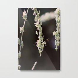 Bee Flying to Hesperaloe Parviflora Flower at Sunnyland Metal Print