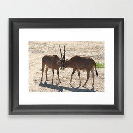 African Antelope Framed Art Print