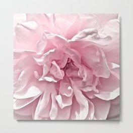 Pink Blush Rose 2 Metal Print