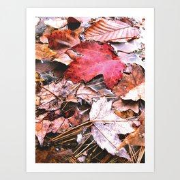 Brisk Autumn  Art Print