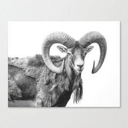Animal Photography | Mountain Goat | Minimalism Art Canvas Print