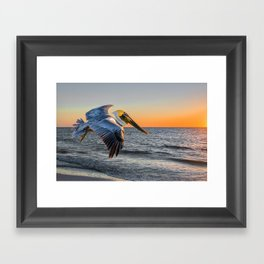 Sunset Pelican Framed Art Print