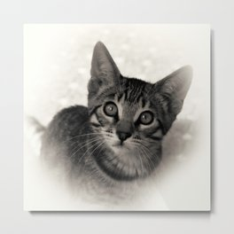 Cute Bengal Kitten Metal Print