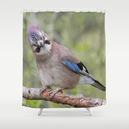 Shy colourful Jay bird Shower Curtain