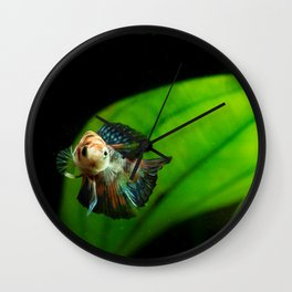 Koi Betta Boy Wall Clock