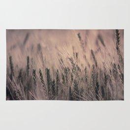 Barley-Pink Rug