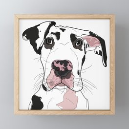 Great Dane Dog (b/w/pink) Framed Mini Art Print