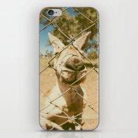 kangaroo iPhone & iPod Skins featuring Kangaroo by Ellenor Argyropoulos