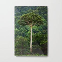 Tanzanian Naked Tree Metal Print