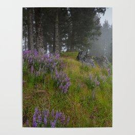 Bald Hill Lupines Poster