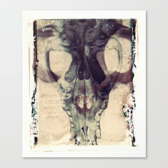 X Ray Terrestrial No. 2 Canvas Print