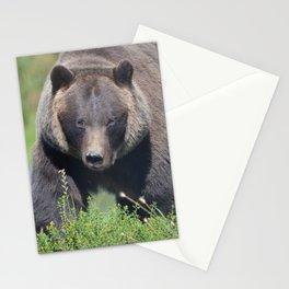 Brown Bear - Alaska Stationery Cards