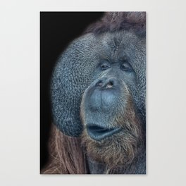 That Ooh Moment Canvas Print