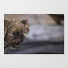 Grampa The Dog Canvas Print