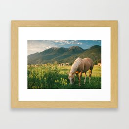 Pretty Horse Eating Grass in the Montana Sunset Framed Art Print