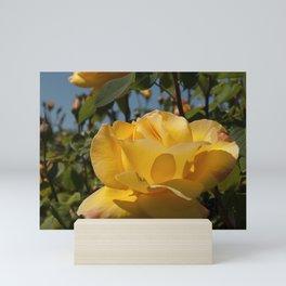 Celebrity Rose Mini Art Print