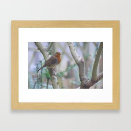 Redbreast Framed Art Print