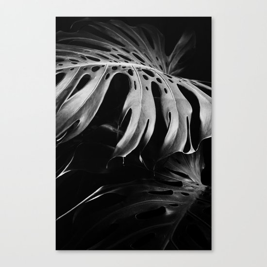 Nature monstera Canvas Print