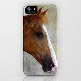 Chestnut Mare iPhone Case