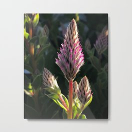 Soft spear Metal Print