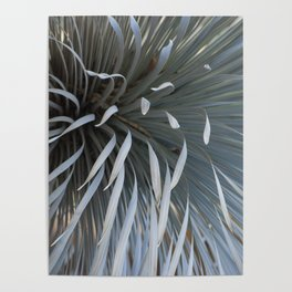 Growing grays Poster