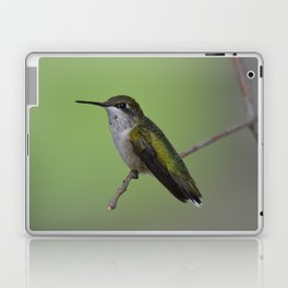 Ruby Throated Humming Bird At Rest Laptop & iPad Skin