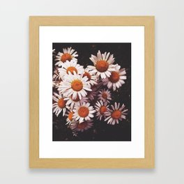 Camomiles Framed Art Print