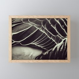 Feathers - Nature in close-up compositions - Fine Art Photography Framed Mini Art Print