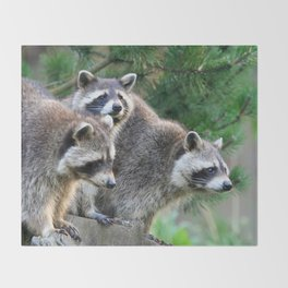 Raccoon_001_by_JAMFoto Throw Blanket