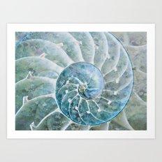 Open Nautilus  Art Print