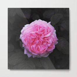 Flower (Beautiful) Metal Print