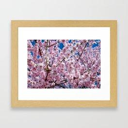 A Blossoming Japanese Cherry Tree Framed Art Print